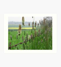 Grass and Barbed Wire Art Print
