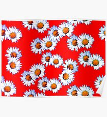 Red and White Daisy Poster