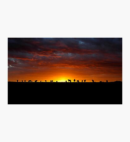 Holy Cow Photographic Print
