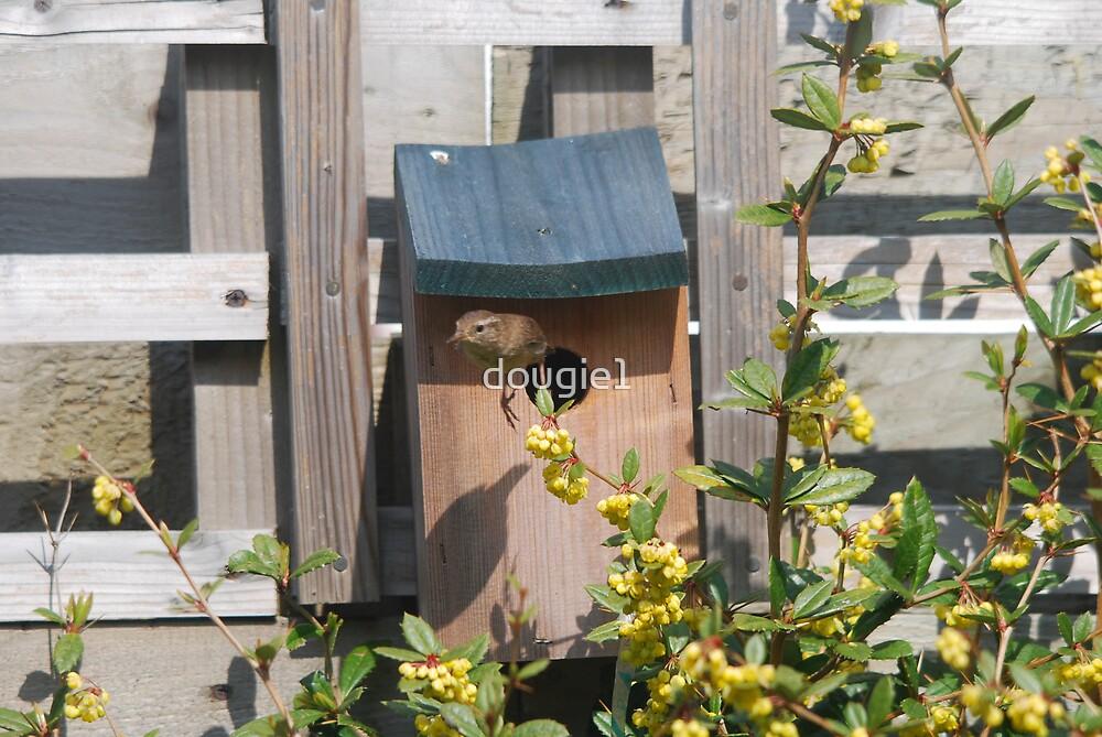 Dougies Garden : WEEEEEEE! by dougie1
