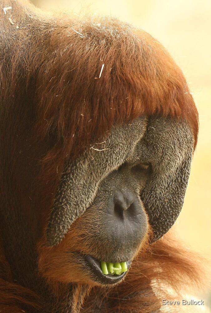 Male Orangutan by Steve Bullock