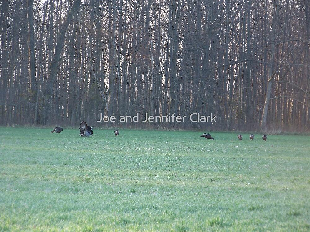Turkeys by Joe and Jennifer Clark