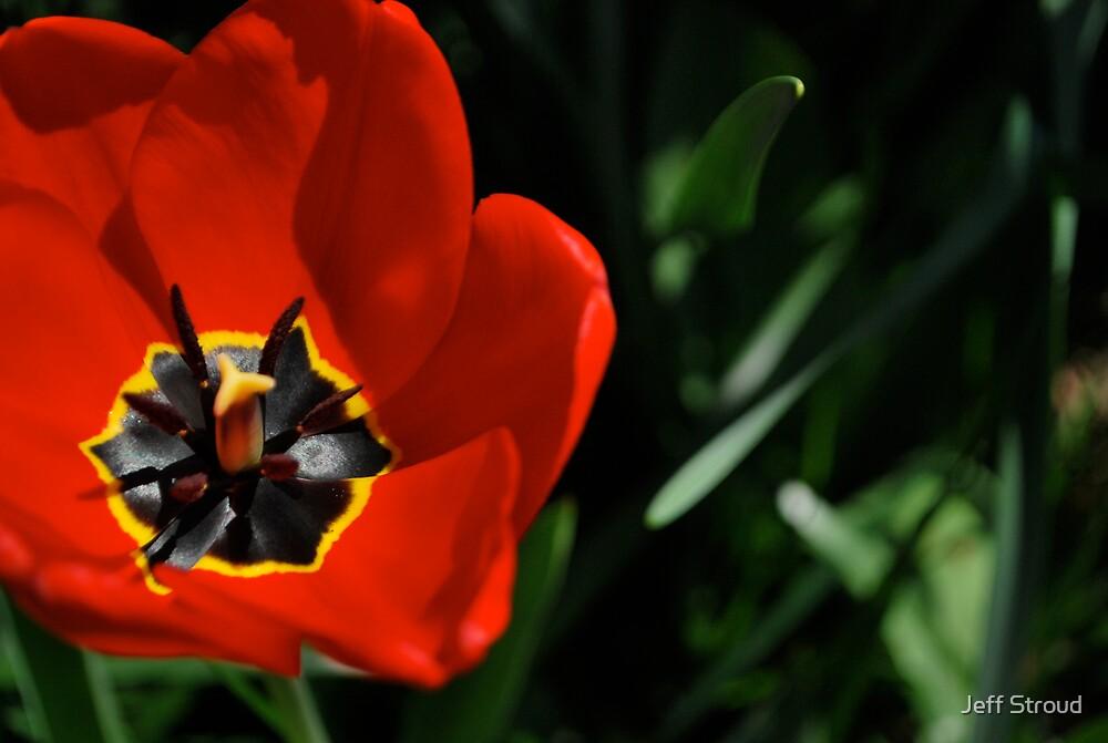 inside the tulip  by Jeff stroud