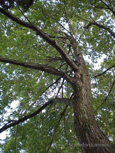 Branching Out by scenefordummies