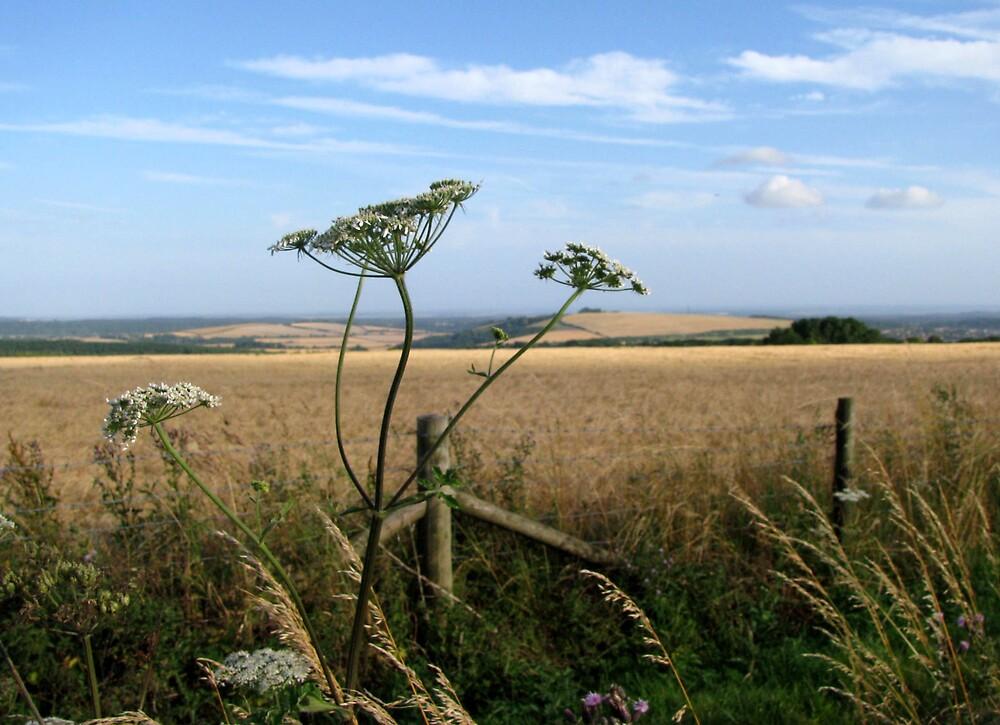 An English Summer by Caroline Anderson