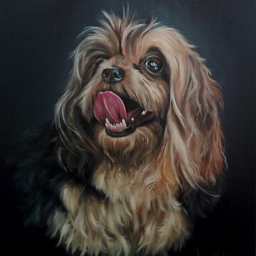 Yorkshire terrier by AnetDuToit