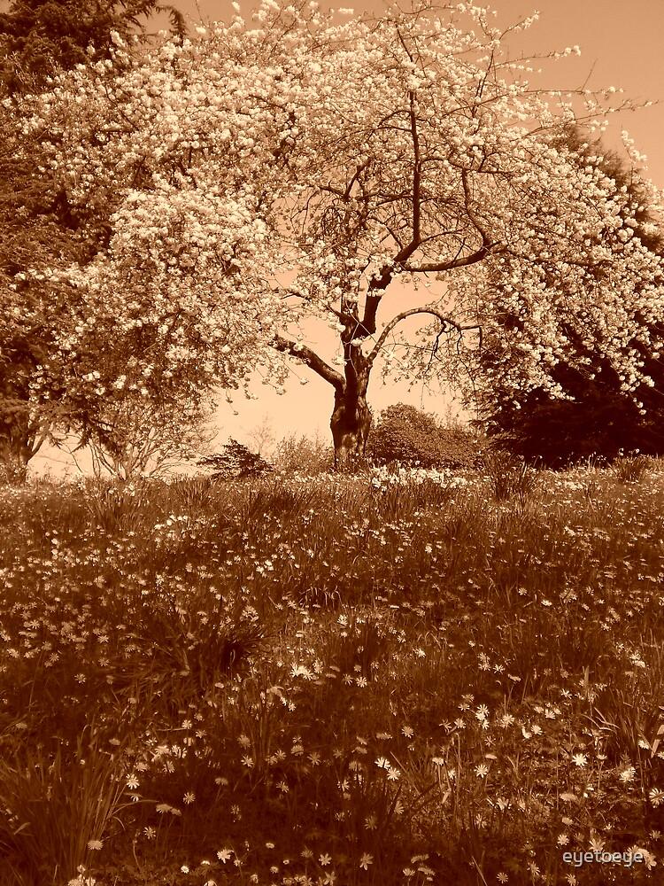 Sepia Cherry Tree by eyetoeye