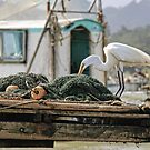 A white egret inspecting the nets by Timothy Gass