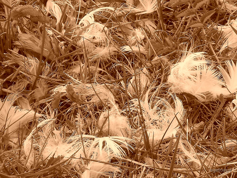 Feathers and Grass in Sepia by eyetoeye