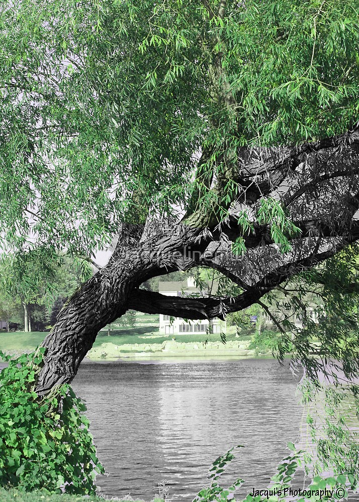 tree by water by Jacquelinemw