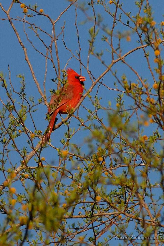 Northern Cardinal by Karen Zimmerman