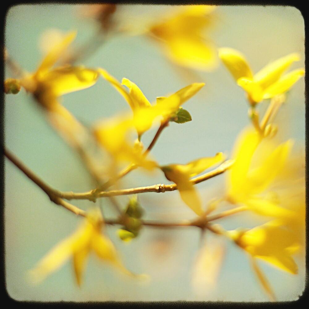 Springtime is yellow time! by Jaime de la Cruz