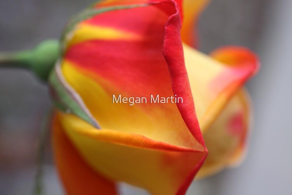 Beginning by Megan Martin