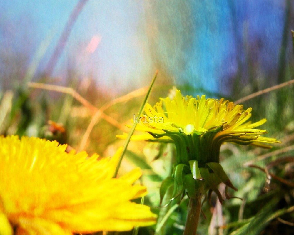 Rainbows and Dandelions by kr1sta