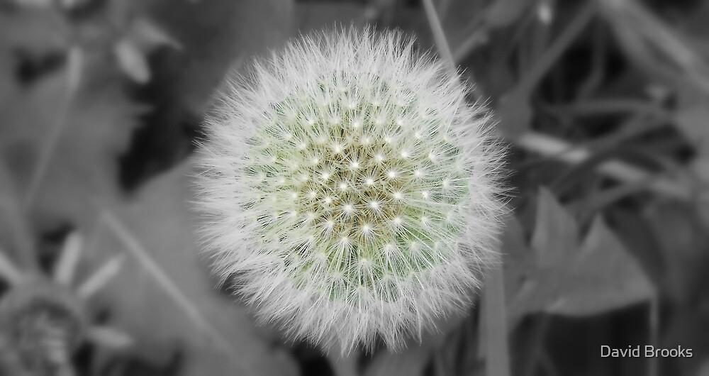 Make a wish by David Brooks