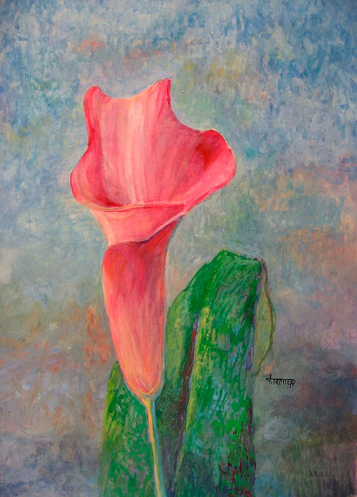 Pink Calla Lily by jimmie