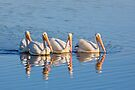 Pelican Quartet by Kenneth Keifer