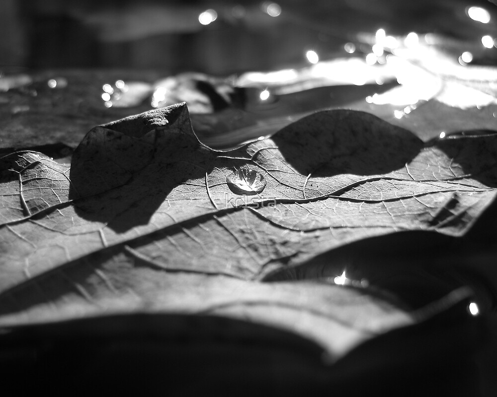 Leaf in the water (black and white) by kr1sta