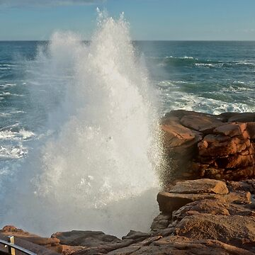 Thunder Hole Booming, Acadia National Park, Maine by mdidrh