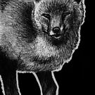 Leucism: European Fox by NoelleMBrooks