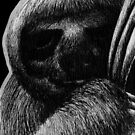 Leucism: Pygmy Three-Toed Sloth by NoelleMBrooks