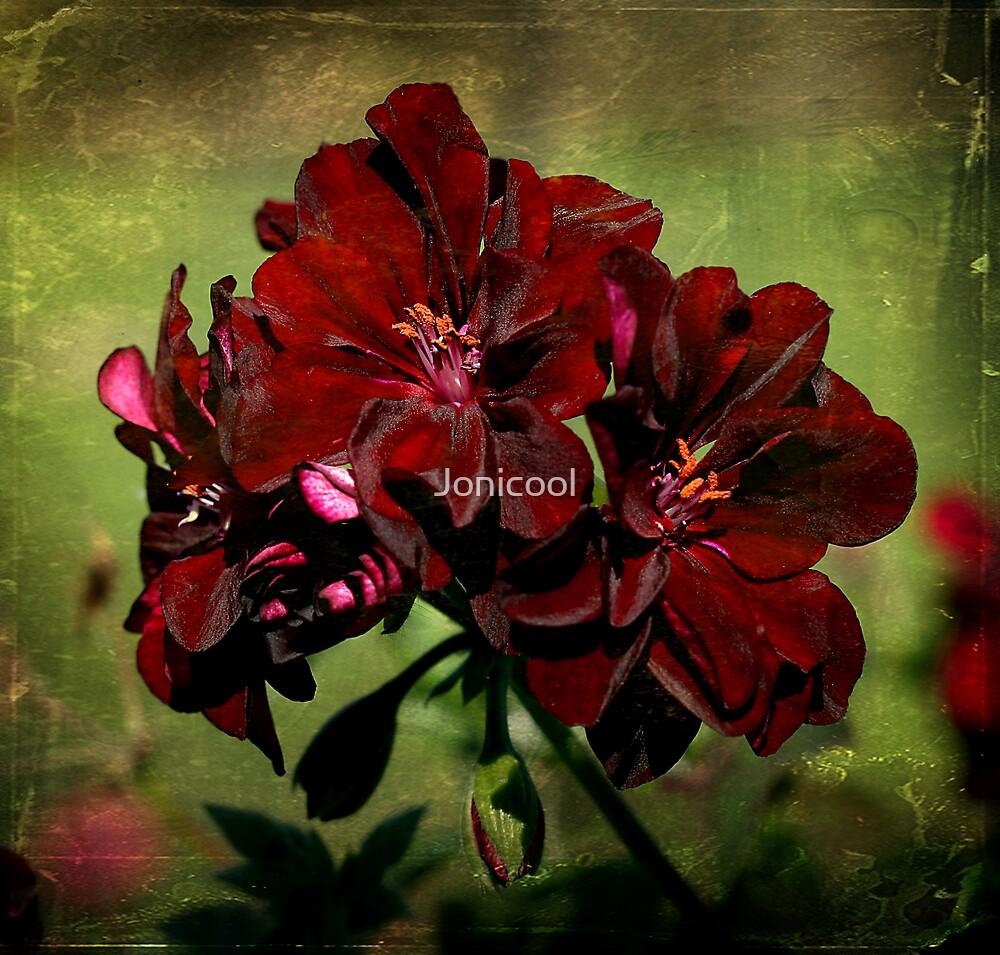 Geranium by Jonicool