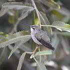 Hummingbird Among the Leaves by Kathleen Brant
