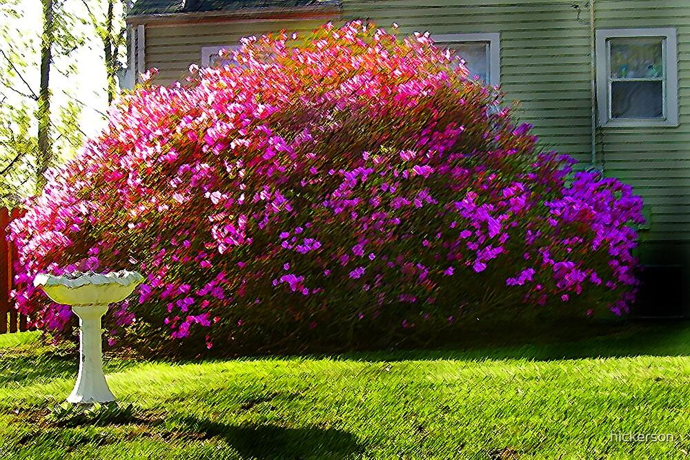 Beauty Bush by hickerson