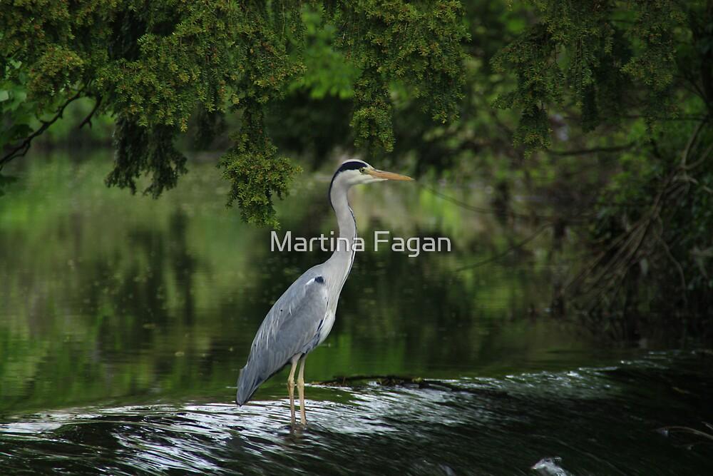 Heron in the Tolka  by Martina Fagan