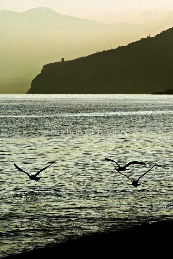 Three seagulls by Barbara  Corvino