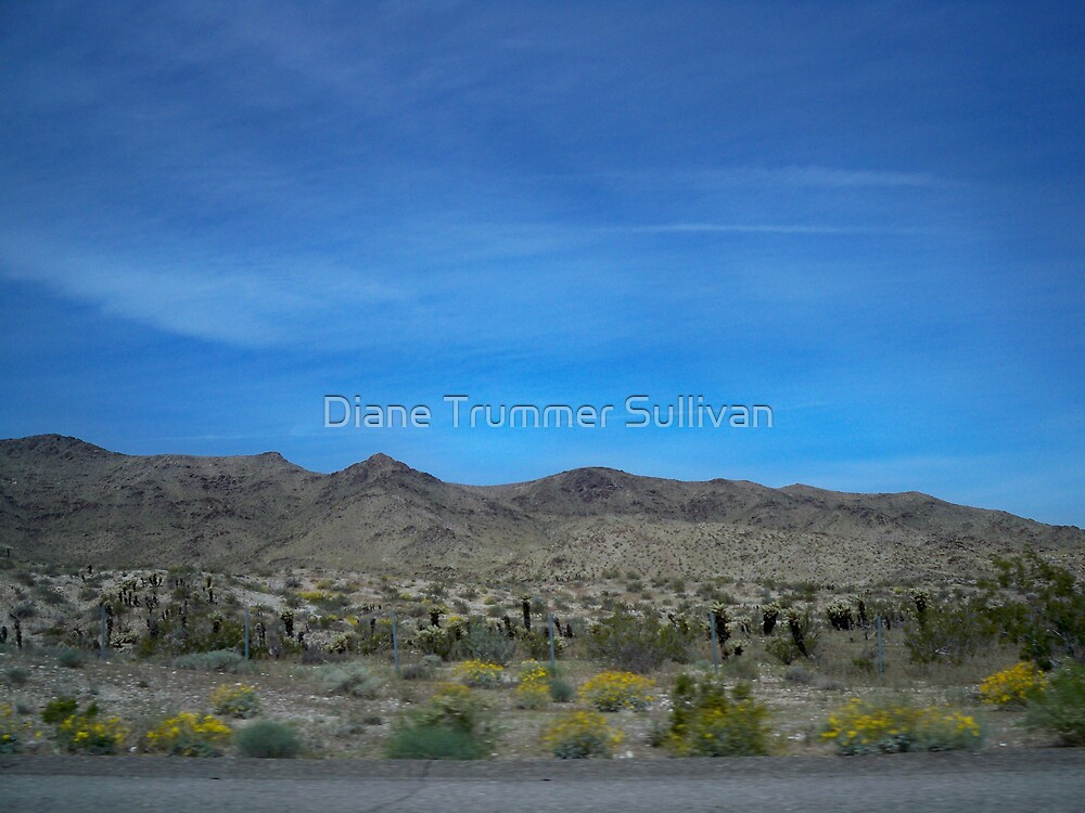Desert in Bloom  by Diane Trummer Sullivan