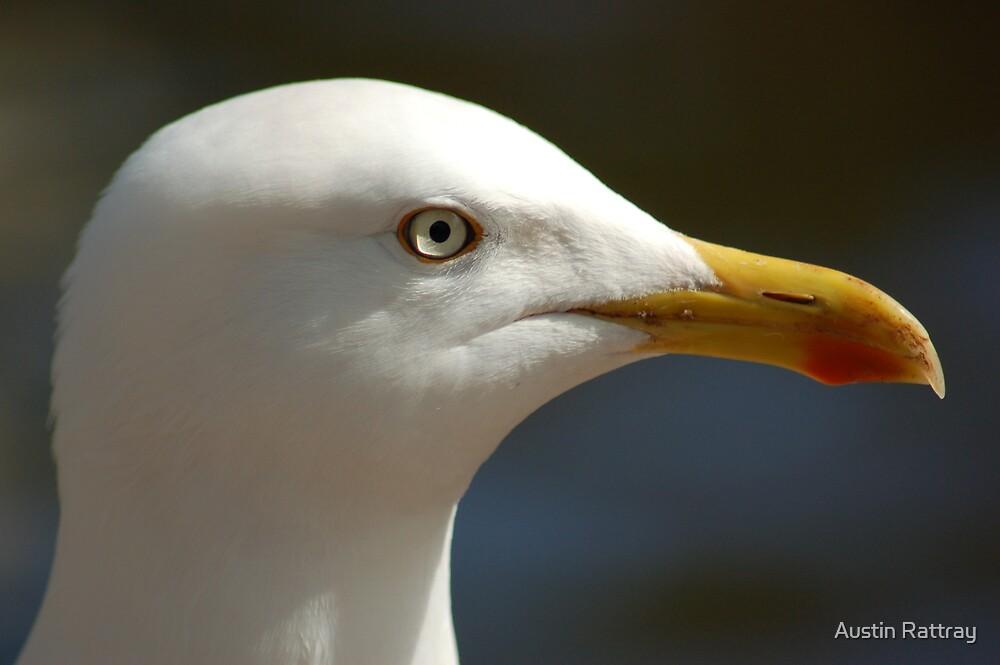 Gull by Austin Rattray