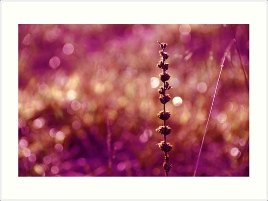 Pink by TeresaMurphy