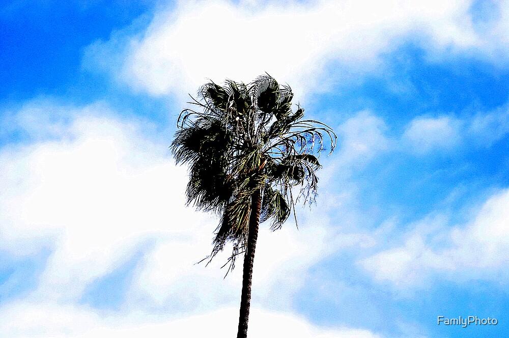 Palm Tree by FamlyPhoto