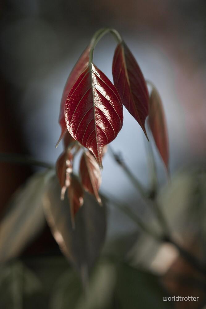 Spring Leaves by Tomas Abreu