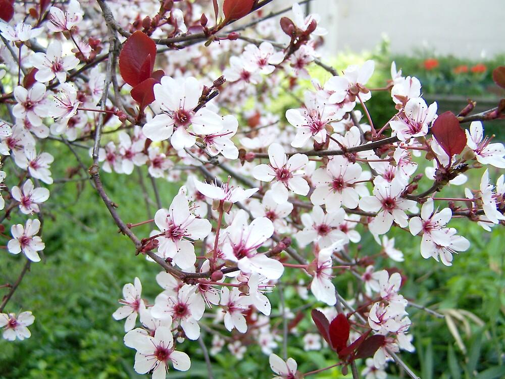 Spring in garden by bogna777