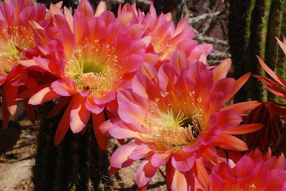 Desert Bouquet by rrushton