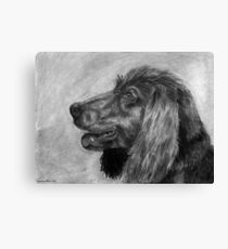 Water Spaniel Canvas Print