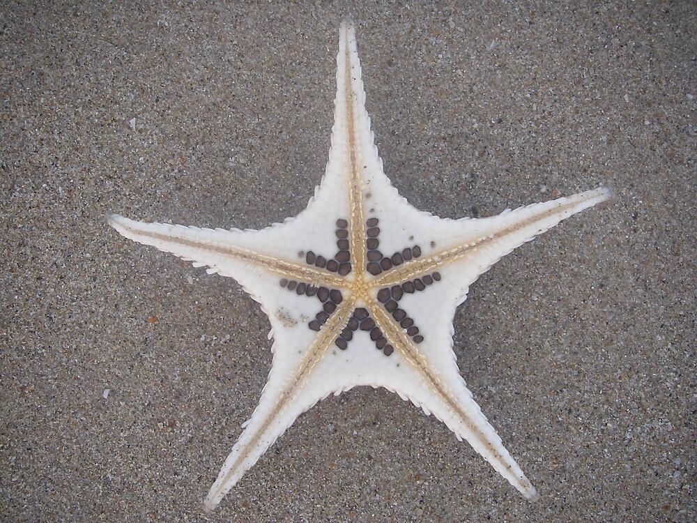 Starry Beach by janemartin