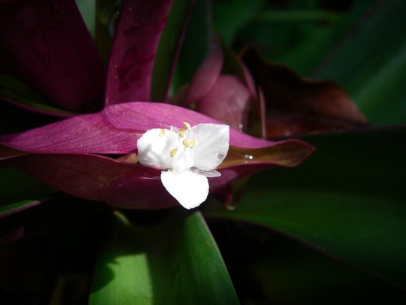 Flowerboat by janemartin