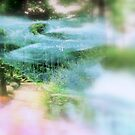 In The Garden   by fiat777