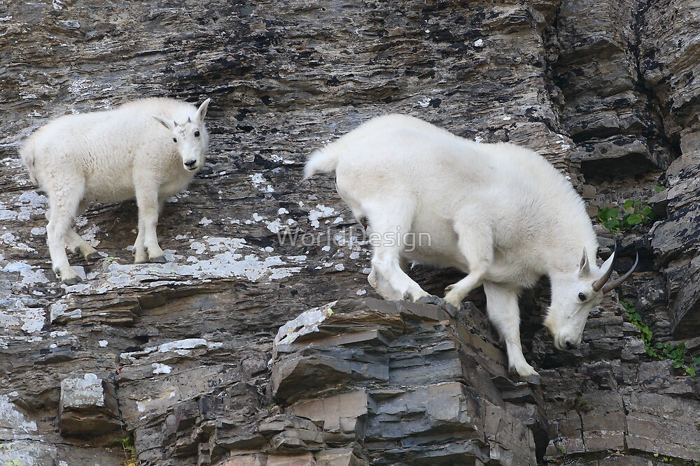 Rock Climbing Family by WorldDesign
