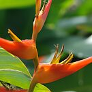 Bird of Paradise by dhjorleifsson