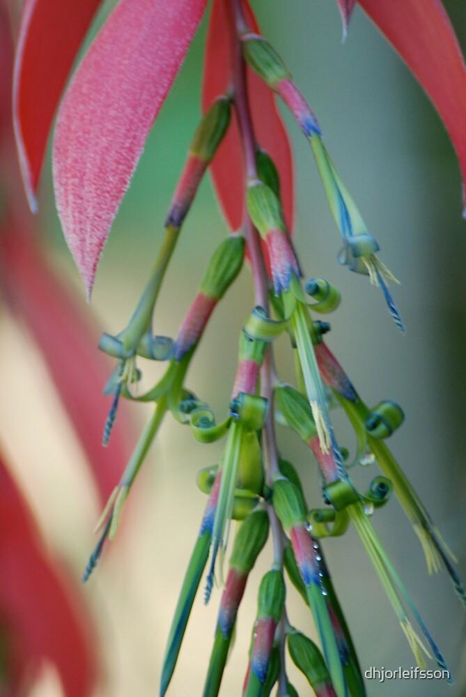 vizquaya orchid by dhjorleifsson