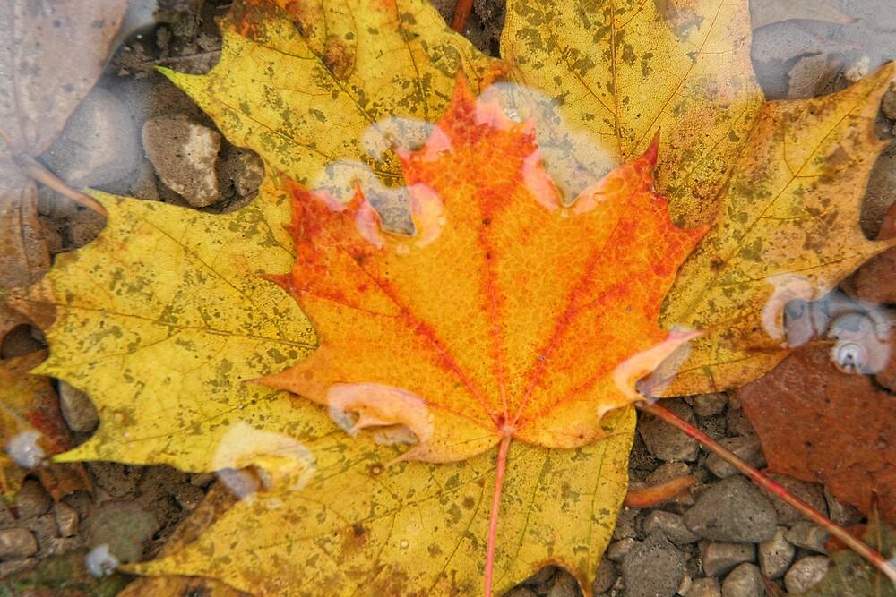 leaf in water by JohnKeeley