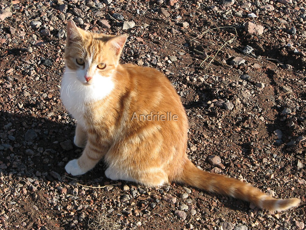 Orange and White Tabby,andrielle,sharon, cat,kitty,feline by Andrielle