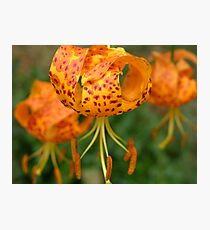 Spotted Humboldt Lily Photographic Print