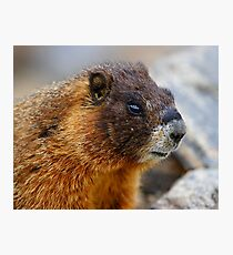 Marmot Portrait Photographic Print