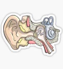 Human Inner Ear Anatomy Illustration Sticker