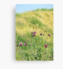 burdock flowers with bees spring season Canvas Print